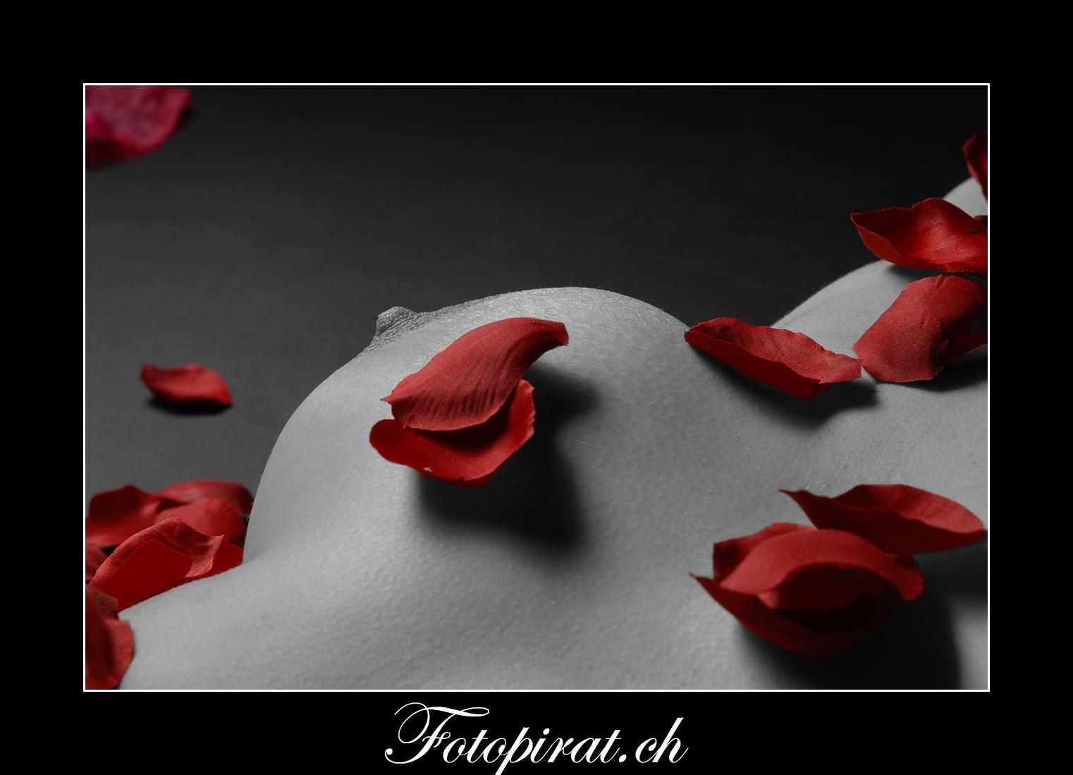 Fotoshooting, Fotostudio, Akt, Nackt, Nudeart, Nude, Modelagentur, Fotomodel, erotik, grosse Brüste, Bodypart, Rosenblätter