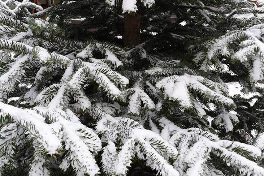 Schnee-shooting_2